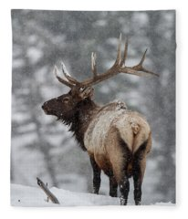 Winter Bull Elk Fleece Blanket