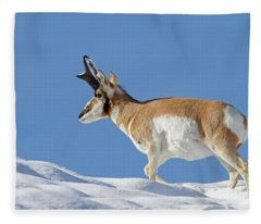 Winter Pronghorn Buck Fleece Blanket