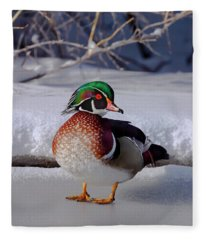 Wood Duck In Winter Snow And Ice, Montana, Usa Fleece Blanket