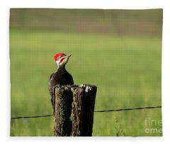 Woody Woodpecker Fleece Blanket