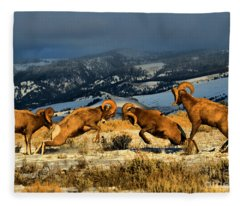 Wyoming Bighorn Brawl Fleece Blanket