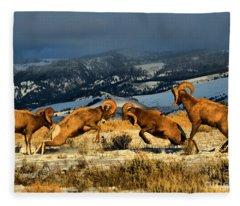 Wyoming Bighorn Brawl Fleece Blanket