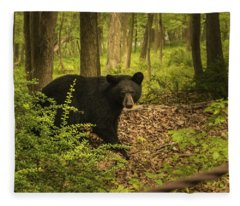 Yearling Black Bear Fleece Blanket