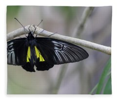 Yellow And Black Butterfly Fleece Blanket