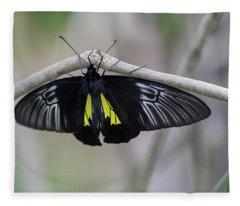 Yellow And Black Butterfly Fleece Blanket