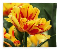 Yellow And Red Triumph Tulips Fleece Blanket