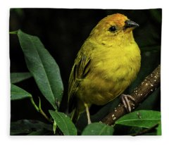 Fleece Blanket featuring the photograph Yellow Bird by Pradeep Raja Prints