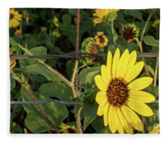 Yellow Flower Escaping From A Barb Wire Fence Fleece Blanket
