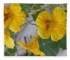 Yellow Nasturtium Fleece Blanket