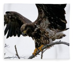 Young Bald Eagle Close-up Fleece Blanket
