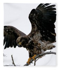 Young Bald Eagle Fleece Blanket