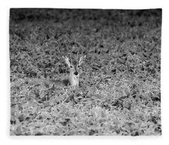 Young Buck 2017-2 Fleece Blanket