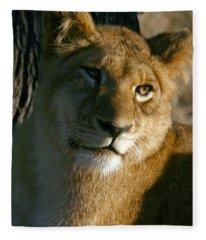 Young Lion Fleece Blanket