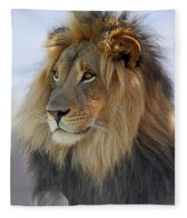 Young Male Lion Fleece Blanket