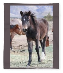 Young Mustang Fleece Blanket