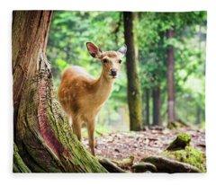 Young Sika Deer In Nara Park Fleece Blanket