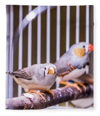 Zebra Finch Pair Fleece Blanket