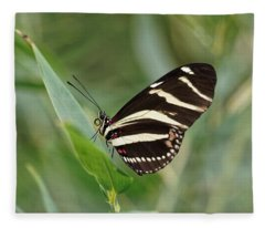 Fleece Blanket featuring the photograph Zebra Longwing Butterfly - 2 by Paul Gulliver