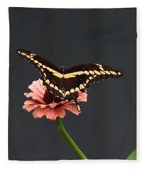 Zinnia With Butterfly 2708  Fleece Blanket