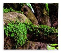 Angel Oak Tree Branches Fleece Blanket