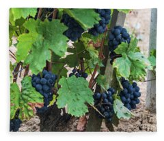 Beaujolais Grapes On The Vine IIi Fleece Blanket