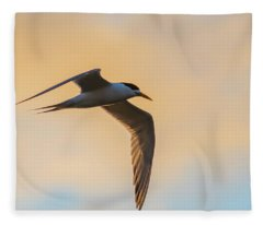 Crested Tern In The Early Morning Light Fleece Blanket