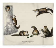 Glaucomys Sabrinus  Polatouche D Amerique  Illustrated By Charles Dessalines D Orbigny  1806 1876  Fleece Blanket