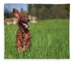 Happy Setter Fleece Blanket