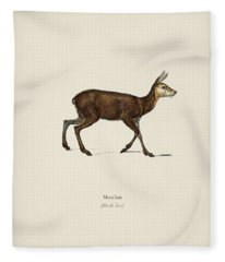 Moschus Illustrated By Charles Dessalines D  Orbigny  1806 1876  Fleece Blanket