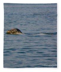 Pacific Harbor Seal Fleece Blanket