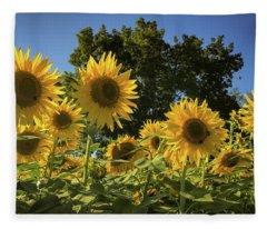 Sunlit Sunflowers Fleece Blanket