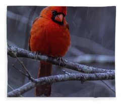 The Curious Cardinal  Fleece Blanket