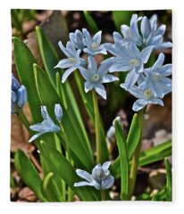 2019 Early April Striped Squill Fleece Blanket