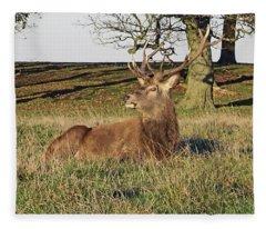 28/11/18  Tatton Park. Stag In The Park. Fleece Blanket