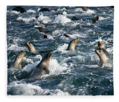 A Raft Of Sea Lions Fleece Blanket