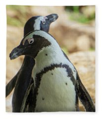 African Penguins Posing Fleece Blanket