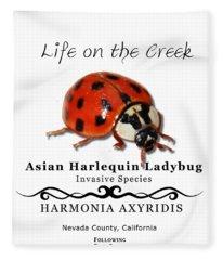 Asian Harlequin Ladybug Fleece Blanket