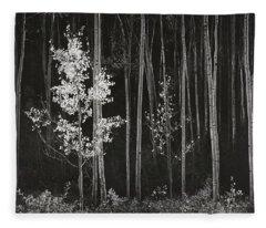 Aspens Northern New Mexico Fleece Blanket