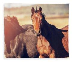 Australian Horses In The Paddock Fleece Blanket