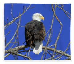 Bald Eagle And Blue Sky Fleece Blanket