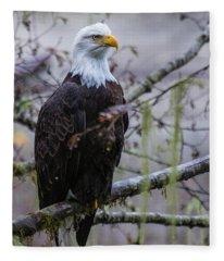 Bald Eagle In Rain Forest Fleece Blanket