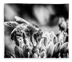 Bee Bee Fleece Blanket