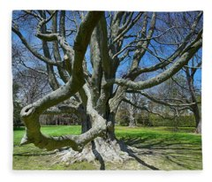 Beech Tree At The Breakers Fleece Blanket