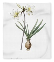 Belladonna Lily Illustration From Les Liliacees  1805  By Pierre Joseph Redoute  1759 1840  Fleece Blanket