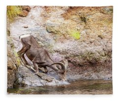 Bighorn Sheep Drinking From Lake In Summer Fleece Blanket