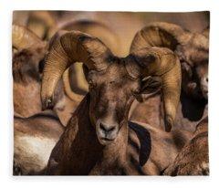 Bighorns Resting In The Afternoon Sun Fleece Blanket