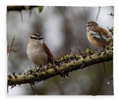 Black-crowned Tchagra And White-browed Scrub-robin Fleece Blanket