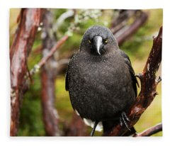 Black Currawong Fleece Blanket