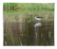 Black-necked Stilt 2018-1 Fleece Blanket