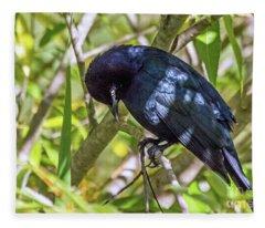 Blackbird In A Tree Fleece Blanket